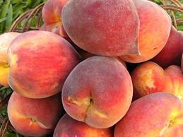 Producción Frutícola